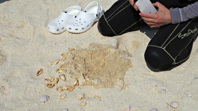 ウミガメの卵の殻