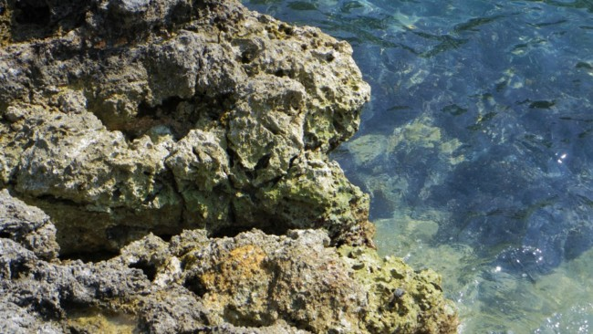 南島の岩場